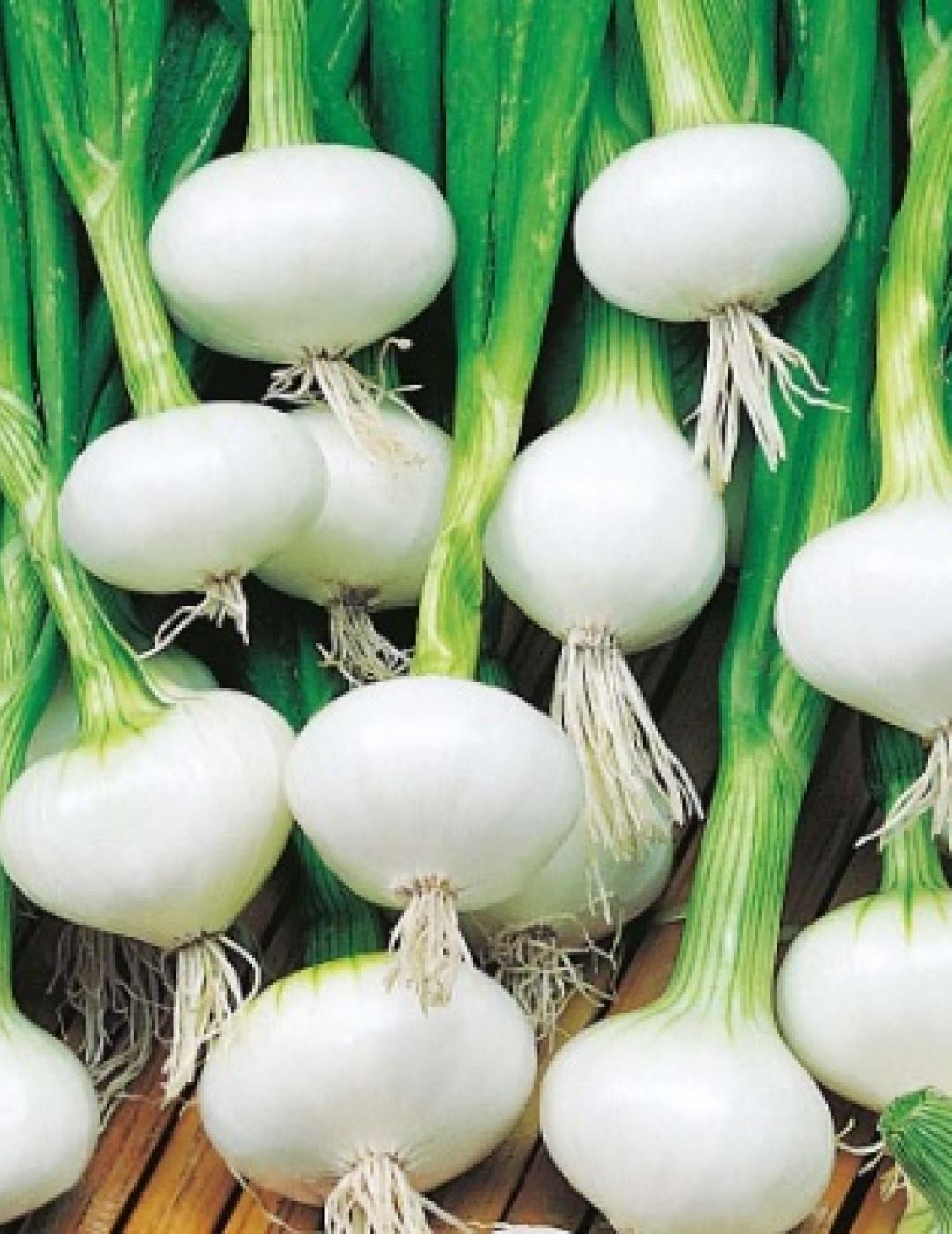 oignon blanc Image